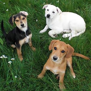 Tierheim Selb Und Umgebung Hunde Suchen Ein Neues Zuhause